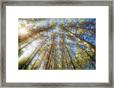 Sun Shining Through Treetops - Retzer Nature Center Framed Print