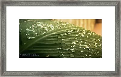 Sun Shower Framed Print by Stefanie Silva
