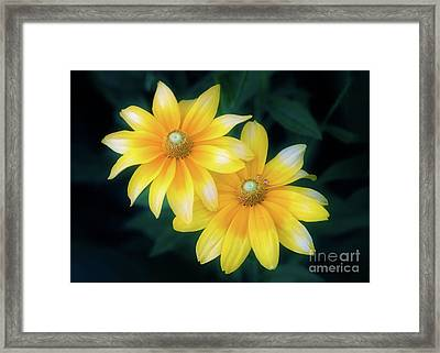 Sun Sisters Framed Print
