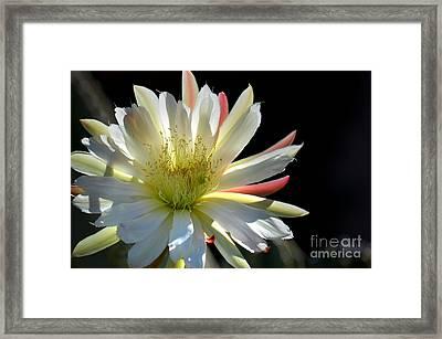 Sun Splashed Framed Print