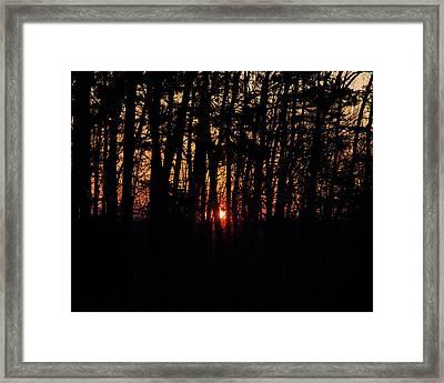 Sun Through The Woods Framed Print