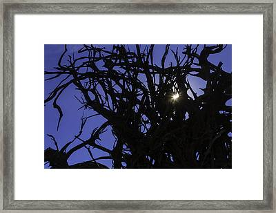 Sun Through Tree Roots Framed Print