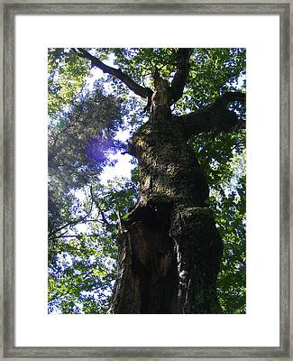 Sun Through Trees Framed Print by Alison Heckard