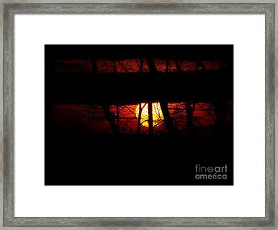 Sun Tree Framed Print
