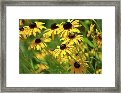 Sun Worshippers Framed Print by JAMART Photography