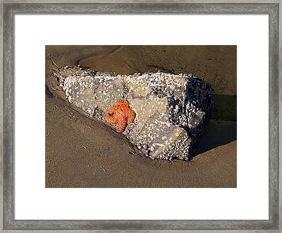 Framed Print featuring the photograph Sunbathing by Angi Parks