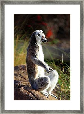 Sunbathing Framed Print