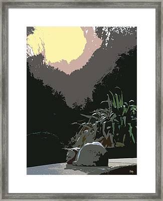Sunbathing Cat Framed Print