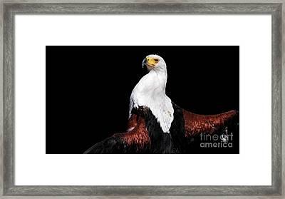 Sunbathing Eagle Framed Print