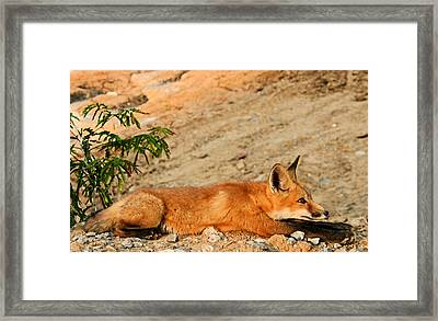 Framed Print featuring the photograph Sunbathing by Kristin Elmquist