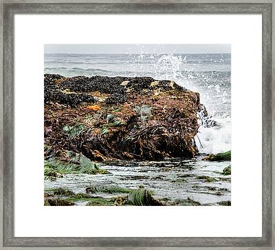 Sunbathing Starfish Framed Print by Penny Lisowski