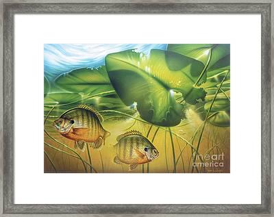 Sunbay Bluegill Framed Print