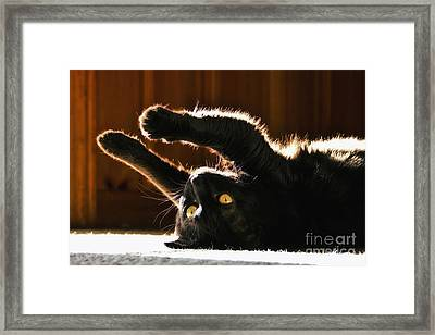 Sunbeam Kitty Framed Print