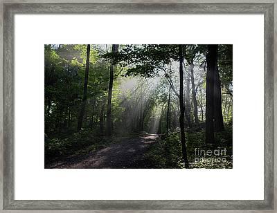 Sunbeam Morning Walk Framed Print