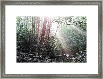 Sunbeam Streaming Into The Forest Framed Print