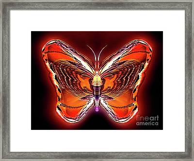 Sunbeam Wildtail Framed Print