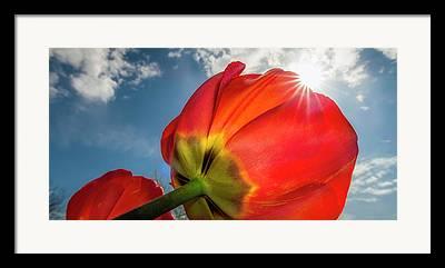 Sunburst Floral Still Life Framed Prints