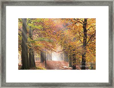 Sunbeams In A Forest In Autumn Framed Print