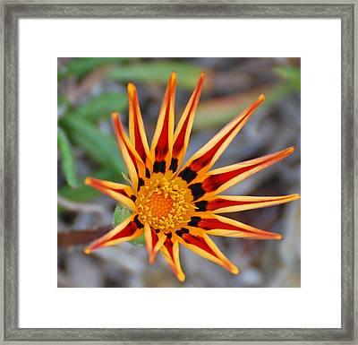 Sunbeams In Bloom Framed Print by Jean Booth