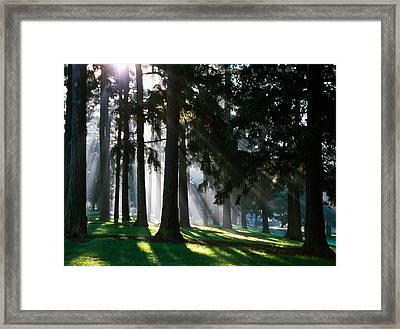 Sunbeams Through Misty Trees, Oregon Framed Print by Panoramic Images