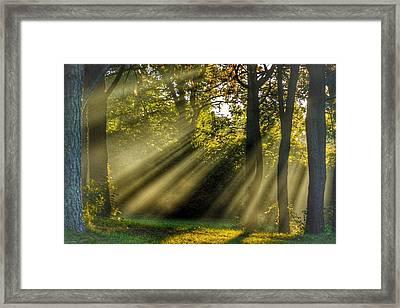 Sunbeams Vii Framed Print