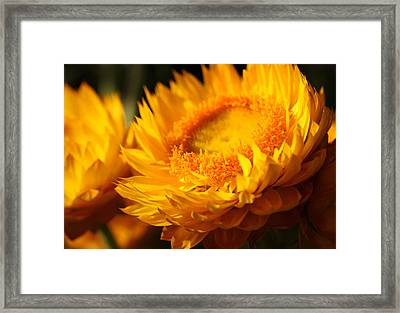 Sunburn Framed Print by Connie Handscomb