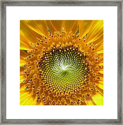 Sunburst Framed Print by Christine Belt