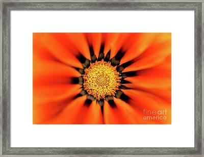 Sunburst Flower Framed Print by Terry Elniski