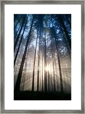 Sunburst In The Forest Framed Print by Greg Vaughn - Printscapes