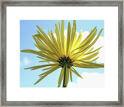 Framed Print featuring the photograph Sunburst by Judy Vincent