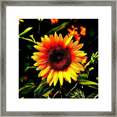 Sunburst Of The Sunflower Framed Print by Marc Mesa