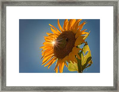 Sunburst Framed Print by Rick Berk