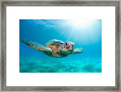 Sunburst Sea Turtle Framed Print by Monica and Michael Sweet