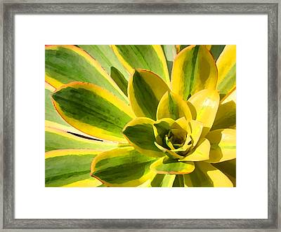Sunburst Succulent Close-up 2 Framed Print by Amy Vangsgard