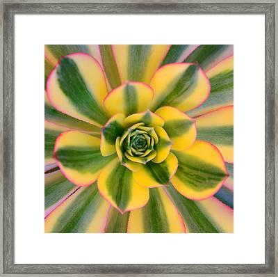 Sunburst Succulent Framed Print
