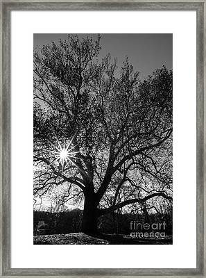 Sunburst Through The Branches Framed Print by David March