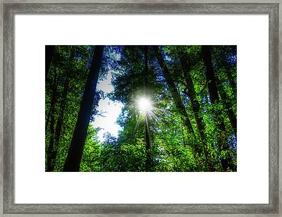 Sunburst Through Trees Framed Print