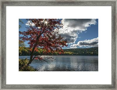 Sunburst Tree At Silvermine Lake Framed Print