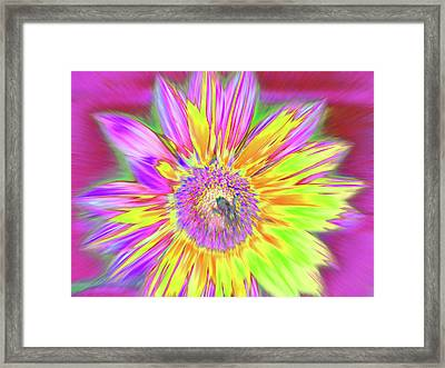 Sunbuzzy Framed Print