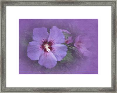 Sunday Hibiscus Framed Print