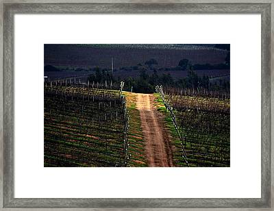 Sun Ray In The Vineyard Framed Print by Fernando Lopez Lago