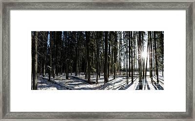 Sundial Forest Framed Print