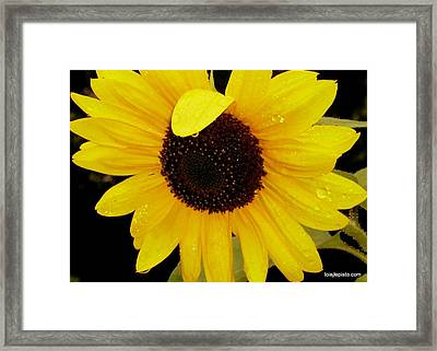 Framed Print featuring the photograph Sundrops by Lois Lepisto