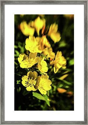 Sundrops Framed Print by Onyonet  Photo Studios