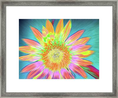 Sunfeathered Framed Print
