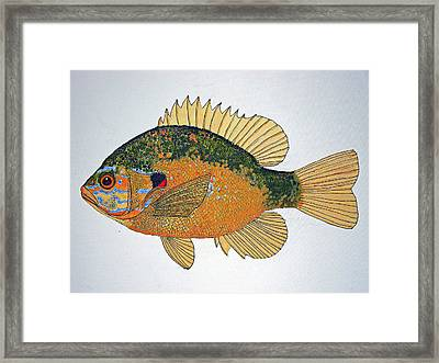 Sunfish South Usa Framed Print by Don Seago
