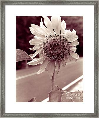 Framed Print featuring the photograph Sunflower 1 by Mukta Gupta