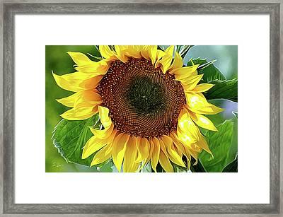 Sunflower 10...06.10 Yellow Symbolised Happiness Framed Print