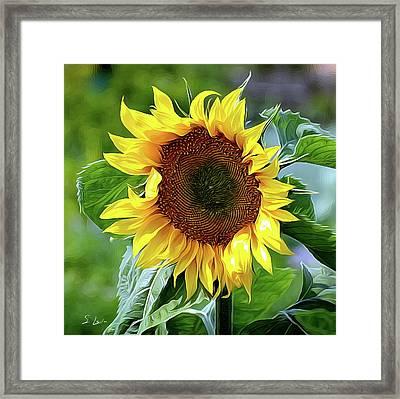 Sunflower 10...10.28 Yellow Symbolised Happiness Framed Print