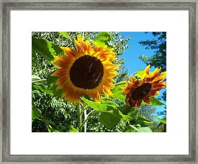Sunflower 102 Framed Print by Ken Day